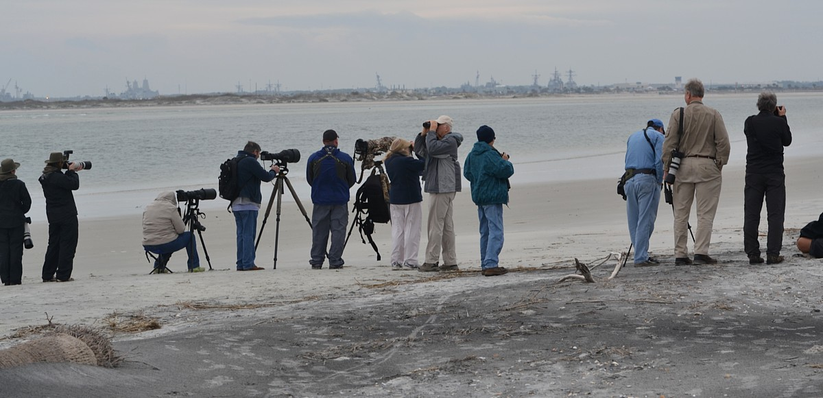 Watching Snowy Owl