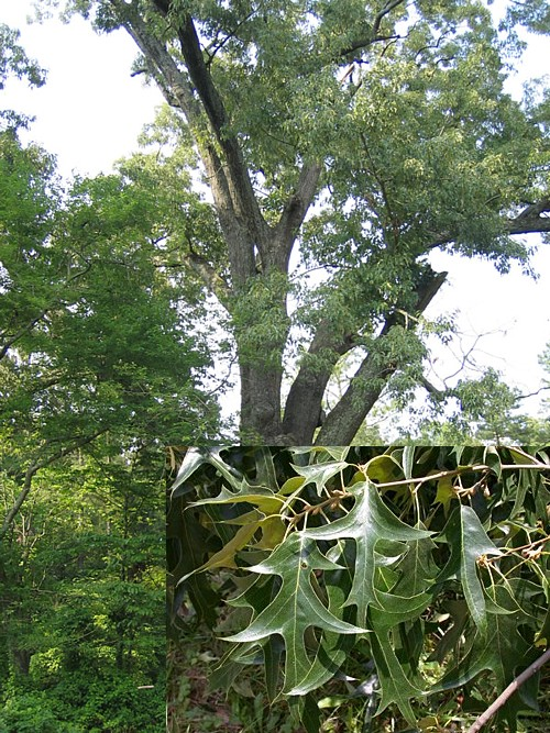 Jaxbirding Com Plants Jacksonville Florida